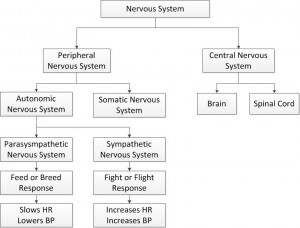 Divisions of the nervous system ccuart Choice Image